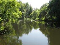 Спокойный вид на озеро выровнянный с деревьями Стоковое Фото
