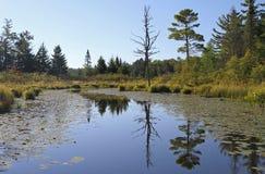 Спокойный водный путь глуши с отражениями стоковое изображение