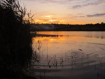 Спокойный заход солнца на озере с тросточкой и пульсациями в воде Стоковое Изображение RF