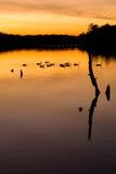 спокойный заход солнца Стоковая Фотография RF