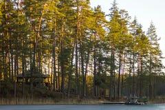 Спокойный и солнечный весенний день в лесе, при Солнце светя на верхней части Стоковое Фото