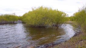 Спокойный ландшафт с зеленой вербой bushes расти в воде акции видеоматериалы