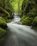 Спокойный мшистый поток Стоковые Фото