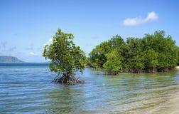 Спокойный пляж Elim с сочными зелеными мангровами на солнечный день стоковые изображения rf