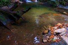 Спокойный поток в утре стоковая фотография rf
