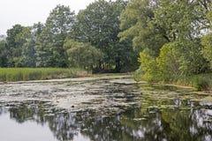 Спокойный пруд в восточной Канаде Стоковые Фотографии RF
