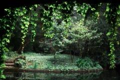 Спокойный сад на предпосылке Стоковое фото RF