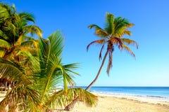 Спокойный сценарный взгляд ландшафта пляжа лета с пальмами Стоковая Фотография