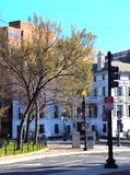 Спокойный угол на пересечении, новые листья города на деревьях стоковое изображение
