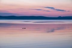 Спокойный фиолетовый заход солнца на озере Balaton в лете Стоковое Изображение