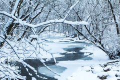 Спокойствие зим Стоковая Фотография RF