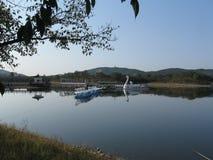 Спокойствие озера лебед Стоковые Изображения