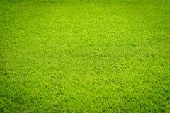 Спортивная площадка естественной новой текстуры зеленой травы новая Стоковая Фотография