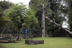 Спортивная площадка качания для примата Стоковое Изображение RF