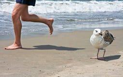 Спортсмен и чайка Стоковая Фотография