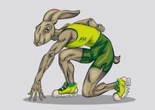 Спортсмен кролика стоковые фотографии rf