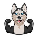 Спортсмен сибирской лайки мышцы Спортсмен Порода собаки вектор иллюстрация штока