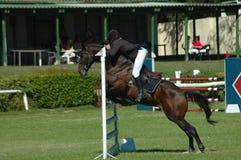 спорт лошади скача Стоковое Изображение