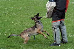 спорт собаки Стоковые Изображения