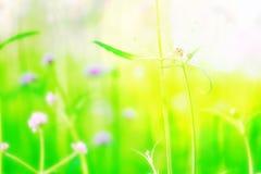 Справедливо правый пинк фокуса нерезкости fields сада flawer дерева полей зимы лето природы внешнего красочное зеленое Стоковое Изображение RF