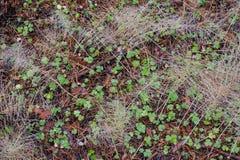 Справочная информация Земля леса осени Стоковое фото RF