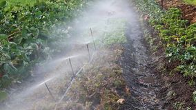 Спринклеры моча овощи в саде мелкого крестьянского хозяйства видеоматериал