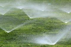Спринклеры на зеленой лужайке Стоковые Фото