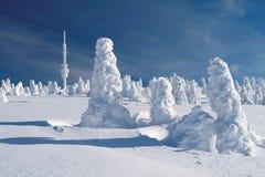 Спрусы покрытые снегом стоковая фотография