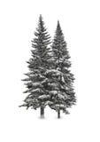 Спрус в снеге Стоковое Изображение RF