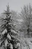 Спрус и лиственные деревья покрыты со снегом стоковые фото