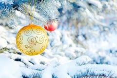 спрус рождества ветви шариков Стоковые Изображения