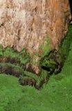 спрятанная лягушка Стоковые Фотографии RF