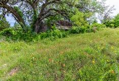 Спрятанная старая покинутая лачуга в Техасе стоковая фотография