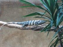 Спрятанная ящерица Стоковые Фото