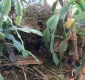 Спрятанное гнездо Стоковые Фотографии RF