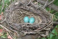 Спрятанное колодцем гнездо робинов Стоковые Изображения