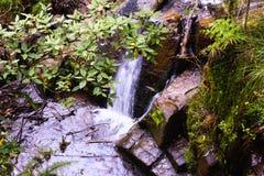 Спрятанный водопад в национальном парке Olinda стоковые изображения rf