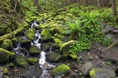 спрятанный водопад потока Стоковые Фотографии RF