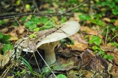 Спрятанный гриб Стоковое Изображение RF