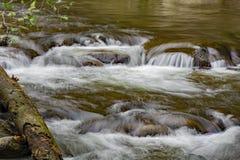 Спрятанный дикий поток форели горы стоковое фото