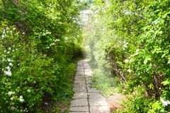 Спрятанный каменный путь в лесе стоковая фотография rf