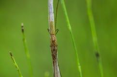 Спрятанный коричневый паук Стоковые Фотографии RF