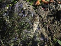 спрятанный кот стоковое фото