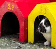 Спрятанный кролик Стоковые Фотографии RF