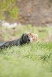 спрятанный медведь стоковое изображение rf
