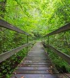 спрятанный мост Стоковые Фотографии RF