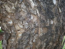 Спрятанный паук Стоковые Изображения RF