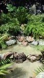 Спрятанный пруд сада Стоковое Фото