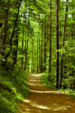 спрятанный путь Стоковая Фотография