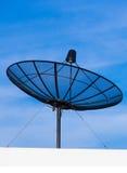 Спутниковый диск на верхней части корня Стоковое Изображение